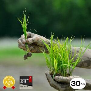 自然農法米 【元年産】熊本県産森のくまさん 30kg 小分け対応【農薬不使用・化学肥料不使用】【送料無料】/お米/熊本県産【米】【米 30kg 送料無料】【米30kg】【米30kg 送料無料】森のくま
