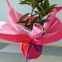 【ラッピング】ほぼ全ての商品にラッピング対応いたします ※花の商品と一緒にお買い求めください