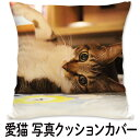 愛猫 クッションカバー 両面 45x45cm 写真 プリント ネコ おしゃれ ペット 猫 ねこ 写真入り プリント オリジナル オ…