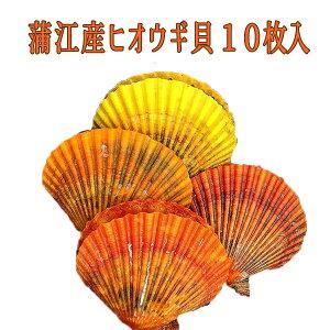 大分県佐伯市蒲江のヒオウギ貝【ヒオウギ貝10枚入り】ホタテもいいけどヒオウギ貝も!!BBQなどで活躍の海鮮物!