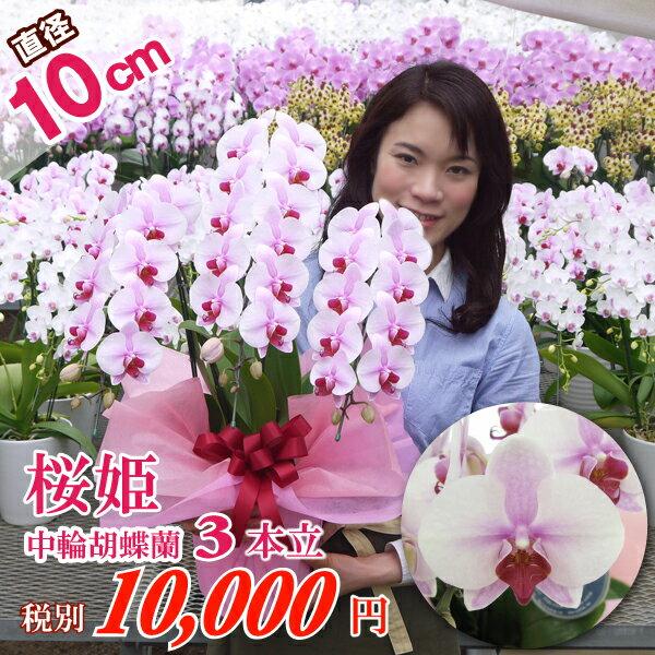 中輪胡蝶蘭桜姫3本立ち ラッピング・立札・カード無料 お誕生日 結婚祝い 各種ギフト・プレゼントに
