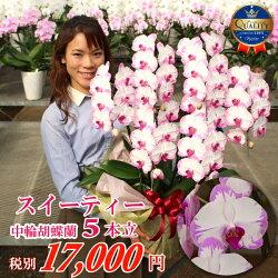 中大輪胡蝶蘭スイーティー5本立ちお誕生日各種ギフト・プレゼントに