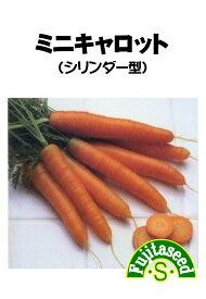 【藤田種子】ミニキャロット(シリンダー)野菜のタネ
