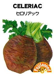 【藤田種子】セロリアック(根セロリ)野菜のタネ