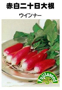 【藤田種子】赤白二十日大根 ウインナー野菜のタネ