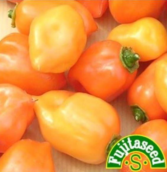 【藤田種子】ハバネロ オレンジ野菜のタネ