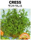 【藤田種子】クレス ランドクレス(ガーデンクレス)野菜のタネ