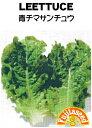 【藤田種子】レタス 青チマサンチュウ野菜のタネ