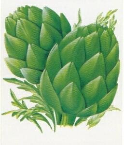 【藤田種子】アーティチョーク2野菜のタネ