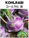 【藤田種子】コールラビ(紫系)野菜のタネ