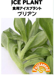 【藤田種子】食用アイスプラント プリアン野菜のタネ