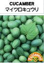 【藤田種子】マイクロキュウリ野菜のタネ