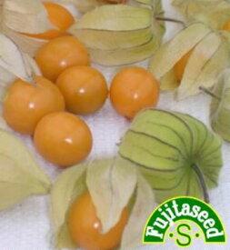 【藤田種子】ストロベリートマト(食用トマトホオズキ)野菜のタネ