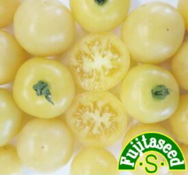 【藤田種子】ミニトマト クリームイエロー野菜のタネ