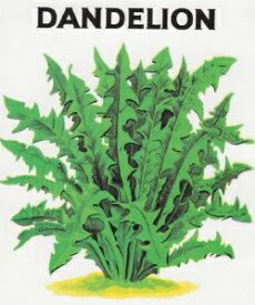 【藤田種子】ダンデライオン(食用タンポポ)ハーブ種