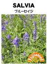 【藤田種子】セイジブルーセイジハーブ種