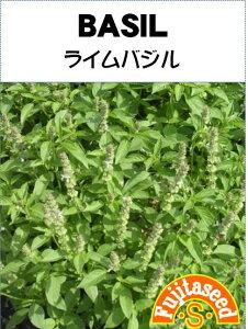 【藤田種子】ライムバジルハーブ種