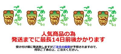 ふくちゃのがぶ飲み国産グアバ茶ティーバッグ3g×50包│沖縄産のグァバ茶はノンカフェインのダイエット健康茶です。送料無料でお届け!