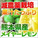 熊本産レモン(メイヤー)ノーワックス! 九州熊本三角町産有機肥料を使用 A級品5kg週2〜3日ですので期日指定はでき…