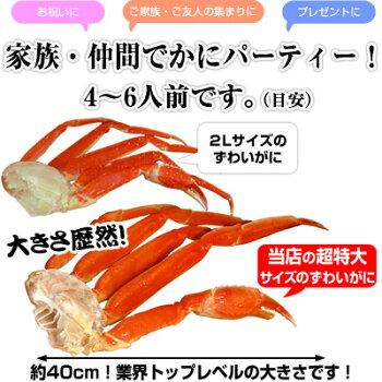 ボイル本ずわいがに4Lサイズ肩2kg(6〜7肩)みんなで食べるのにオススメ![かにカニ蟹ボイル2kg]