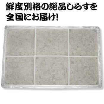 【送料無料】愛媛県産AAAランク極上釜揚げしらす1kg