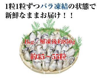 広島県産ジャンボ大粒カキのむき身1kg[解凍後約850g]大粒で濃厚!!