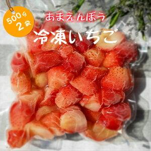 福島県産 冷凍いちご いちご 須賀川 とちおとめ あまえんぼう 濃厚 甘み 酸味 お得 たっぷり ビタミン かき氷 けずりいちご 氷いちご ジャム いちごミルク ケーキ スイーツ パフェ おうち時