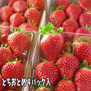 とちおとめ いちご (4パック入2L〜3L) 栽培方法にこだわった甘いイチゴ【発送時期:2月中旬頃〜5月上旬頃まで発送予定】