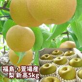 【ジャンボな新高梨】福島県かやばの梨(5kg箱7〜13玉入)。1玉450g以上の大きな梨。