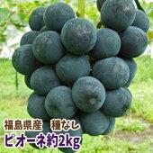 福島県産のピオーネ(種なし)約2kg【発送時期:9月初旬〜9月下旬頃まで予定】10P29Aug16