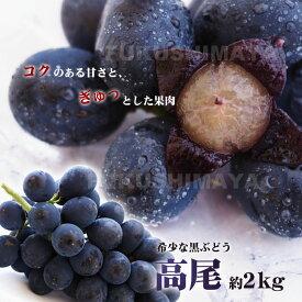 【贈答向】福島県産 高尾 ぶどう 種なしたっぷり 約2kg 3〜6房入 【発送時期:9月中旬頃〜10月中旬頃まで予定】