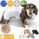 【2020年秋冬新作】メッシュインナー付ウールブークレーパンツ(ダックス・小型犬)【ネコポス値3】【犬服 ドッグウエ…