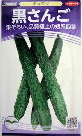 【サカタのタネ】黒さんご胡瓜 1.2ml