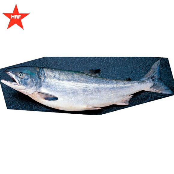 生秋鮭 オス(1尾3kg前後)銀毛
