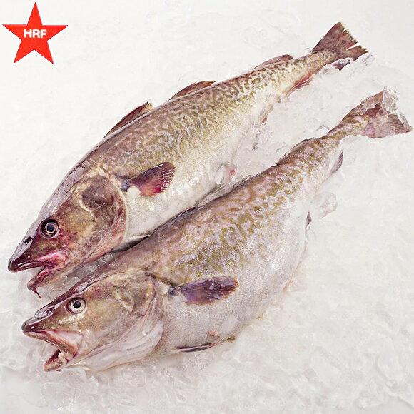 礼文島産真鱈(まだら)オス 1尾3kg前後真だち入り