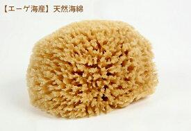 【エーゲ海産】天然海綿 Lサイズ_