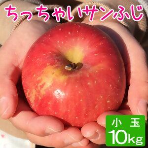 訳あり りんご 小玉 サンふじ 約10キロ 20〜27玉x2段 10kg 等級D 送料無料 葉とらず 信州りんご 減農薬 長野県産 産地直送
