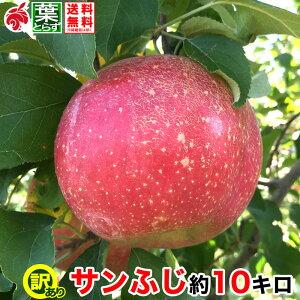 12月上旬より 家庭用 りんご サンふじ 約10キロ およそ24〜40玉 葉とらず 信州りんご 長野県産 産地直送 送料無料 等級B 10kg プレゼント ギフト