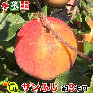 12月上旬より 訳あり りんご サンふじ 約3キロ およそ7〜12玉 葉とらず 信州りんご 長野県産 産地直送 傷・サビあり 送料無料 等級C 3kg