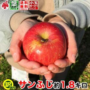 りんご サンふじ 小玉 約2キロ 7〜11玉 2kg 等級D 葉とらず 信州りんご 減農薬 長野県産 産地直送