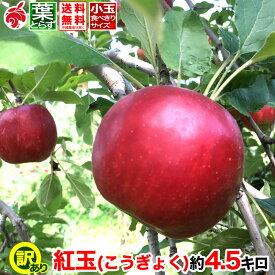 ご予約受付中 家庭用 りんご 紅玉 約5キロ およそ12〜20玉 等級B 5kg 送料無料 葉とらず 信州りんご 減農薬 長野県産 産地直送