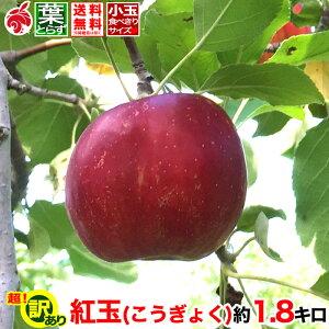 ご予約受付中 訳あり りんご 紅玉 約2キロ 傷・サビあり およそ5〜10玉 等級C 2kg 送料無料 葉とらず 信州りんご 減農薬 長野県産 産地直送