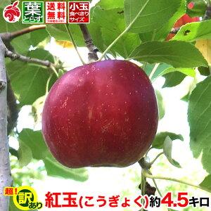 ご予約受付中 訳あり りんご 紅玉 約5キロ 傷・サビあり およそ12〜20玉 等級B 5kg 送料無料 葉とらず 信州りんご 減農薬 長野県産 産地直送