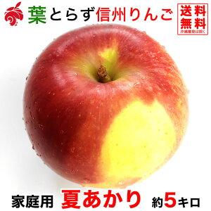 ご予約受付中 家庭用 夏あかり 約5キロ およそ12〜20玉 希少品種 信州りんご 等級B 5kg 送料無料 数量限定