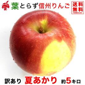 ご予約受付中 訳あり 夏あかり 約5キロ およそ12〜20玉 希少品種 信州りんご 等級C 5kg 送料無料 数量限定