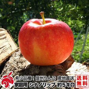 8月上旬より 家庭用 シナノリップ 約5キロ およそ12〜25玉 希少品種 信州りんご 等級B 5kg 減農薬 葉とらず 送料無料 数量限定 産地直送 長野県産