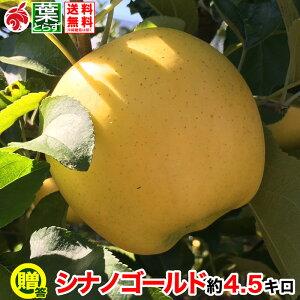 11月上旬より 贈答用 りんご シナノゴールド 約5キロ およそ12〜20玉 葉とらず 信州りんご 長野県産 産地直送 傷・サビあり 送料無料 等級A 5kg