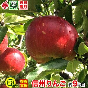 ご予約受付中 復興支援 家庭用 葉とらず りんご 約10キロ およそ24〜40玉 10kg 等級B 減農薬 長野県産 産地直送