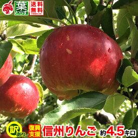 ご予約受付中 復興支援 家庭用 葉とらず りんご 約5キロ およそ12〜20玉 5kg 等級B 減農薬 長野県産 産地直送