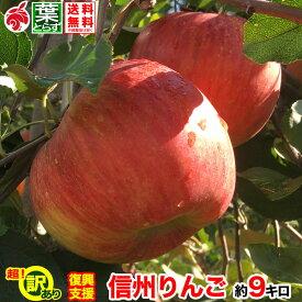 ご予約受付中 復興支援 訳あり 葉とらず りんご 約10キロ およそ24〜40玉 10kg 等級C 傷サビあり 訳あり 減農薬 長野県産 産地直送